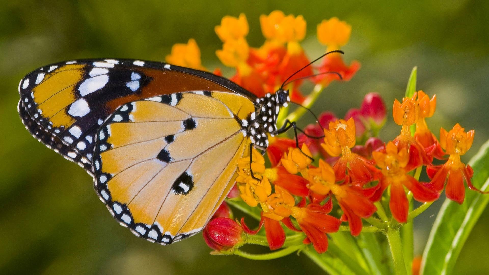Flower Butterfly Wallpaper | PixelsTalk.Net