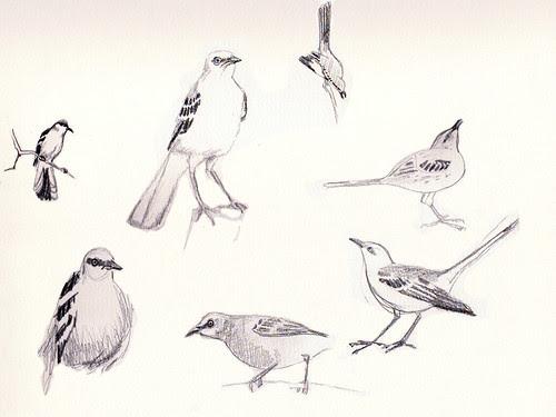 mockingbird sketches
