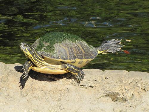 IMG_7009_Turtles