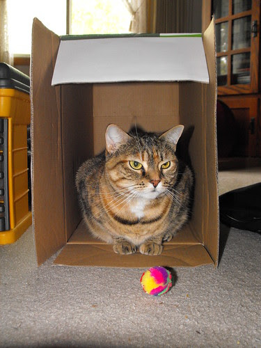 Nina in the Box