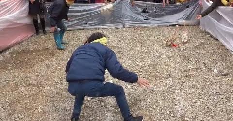 Bịt mắt bắt vịt lăn xả tưởng rễ mà khó Blindfolded catch ducks - Best funny videos