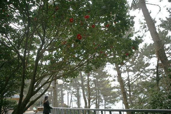 우제봉 산책로 동백꽃