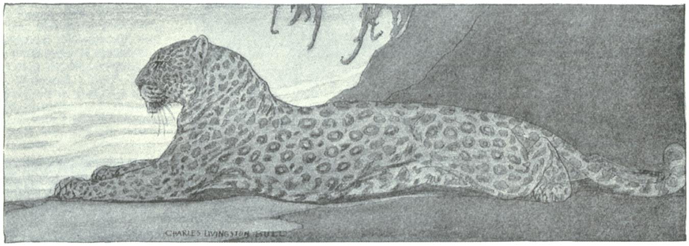 Pop Wombat