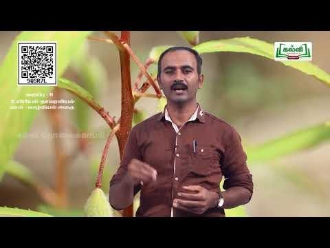 11th தாவரவியல் செல் உயிரியல் மற்றும் உயிரி மூலக்கூறுகள் அலகு 6 பகுதி 2 Kalvi TV