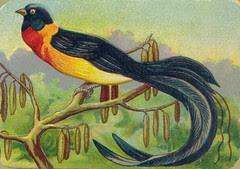 oiseauchromos 6