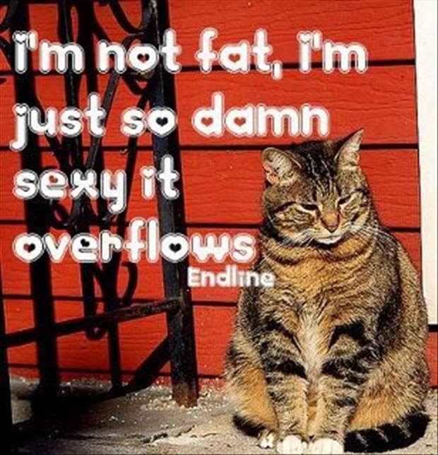 Funny Quotes I Am Not Fat I Am Sexy Dump A Day