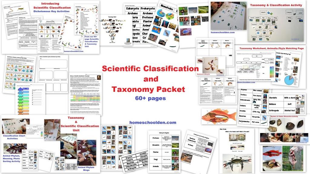 Taxonomy Classification And Dichotomous Keys Worksheet ...
