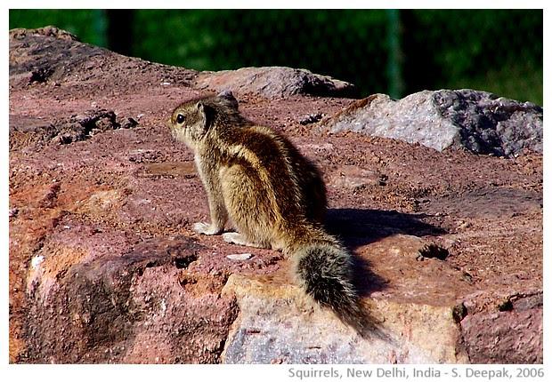 Squirrel, Qutab Minar, New Delhi, India - S. Deepak, 2006