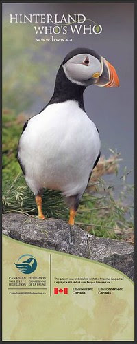 Big Puffin :-D by Megan Lorenz