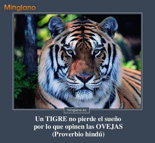 Proverbio Hindu Sobre Tigres
