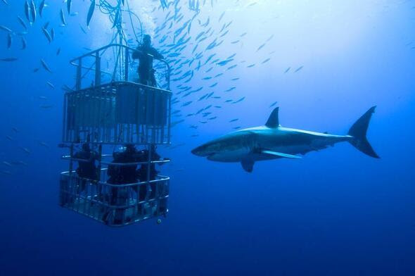 Köpek Balıkları Hakkında 16 şaşırtıcı Bilgi Hayat Haberleri