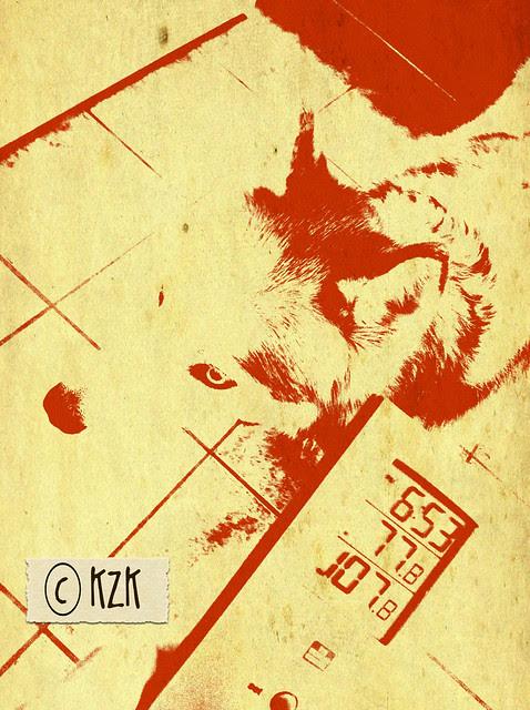 IMG_9374 Zim