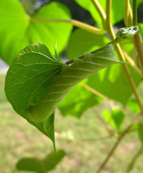 caterpillar3