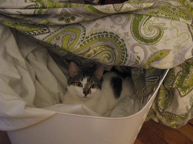 Penny in laundry fort