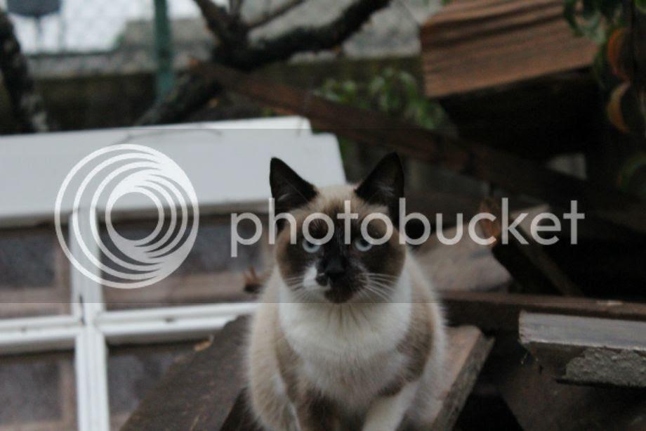 photo 008_zpsjhosklvx.jpg
