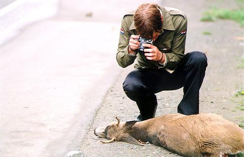 deer 5 by kynan tait.