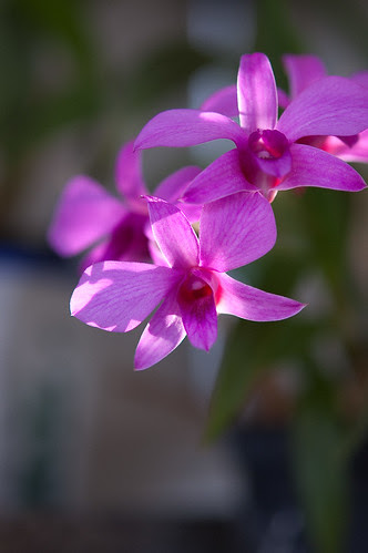 Orquideacea by Itajaí de Albuquerque