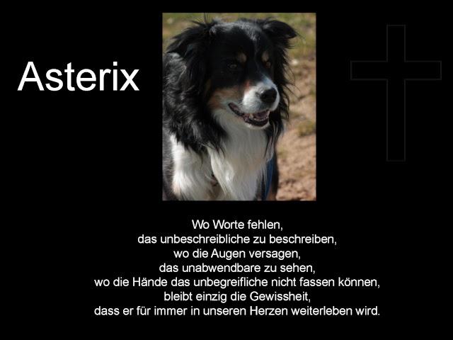 Abschied Hund Gedicht