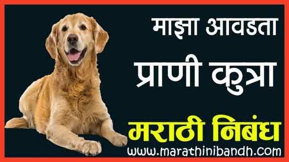 माझा आवडता प्राणी कुत्रा मराठी निबंध | Maza Avadta Prani Kutra