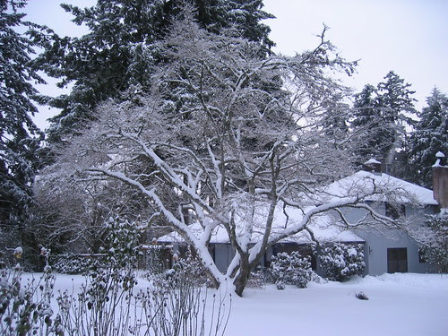 The tree and the house