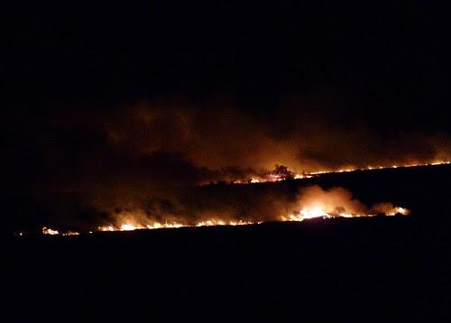 P1040100 - Grass fire at Llangennith, Gower