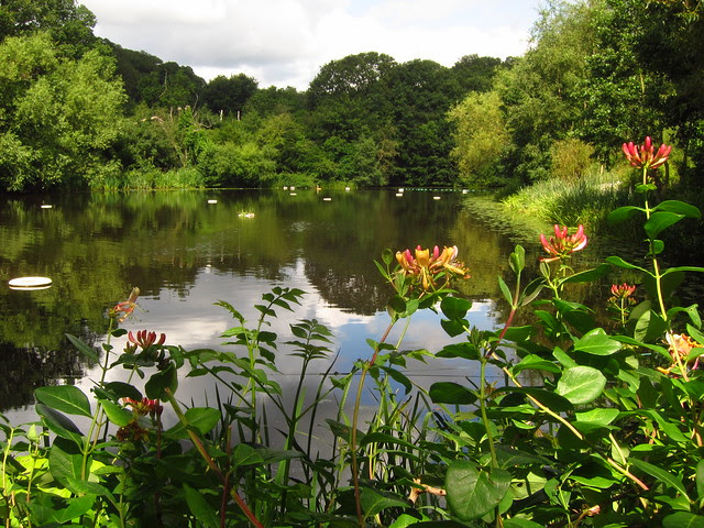 The Ladies' Pond, Hampstead Heath