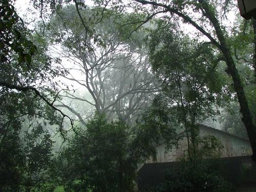 estética da chuva 2