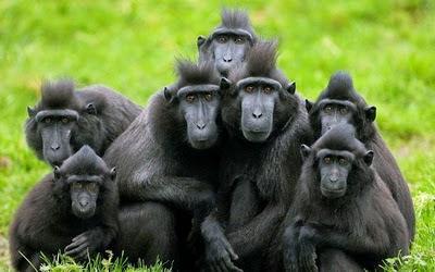 Kawin memang suatu hal yang mengasikkan meskipun caranya tidak sama  untuk semua mahluk 7 Hewan yang Memiliki Cara Kawin Paling Unik di Dunia