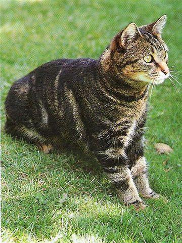 """Résultat de recherche d'images pour """"chats harets"""""""