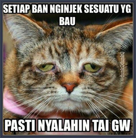 tai kucing gambar kata kata lucu pinterest