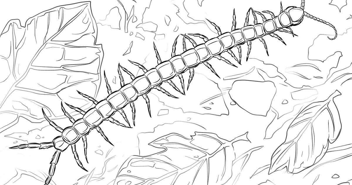 ausmalbild riesenkalmar  koloss kalmar riesenkalmar