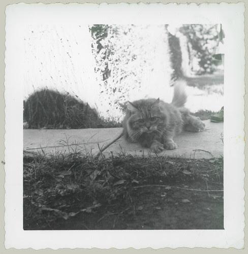 Cat on a walk