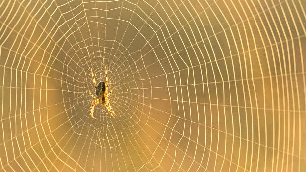 मकड़ी का जाला