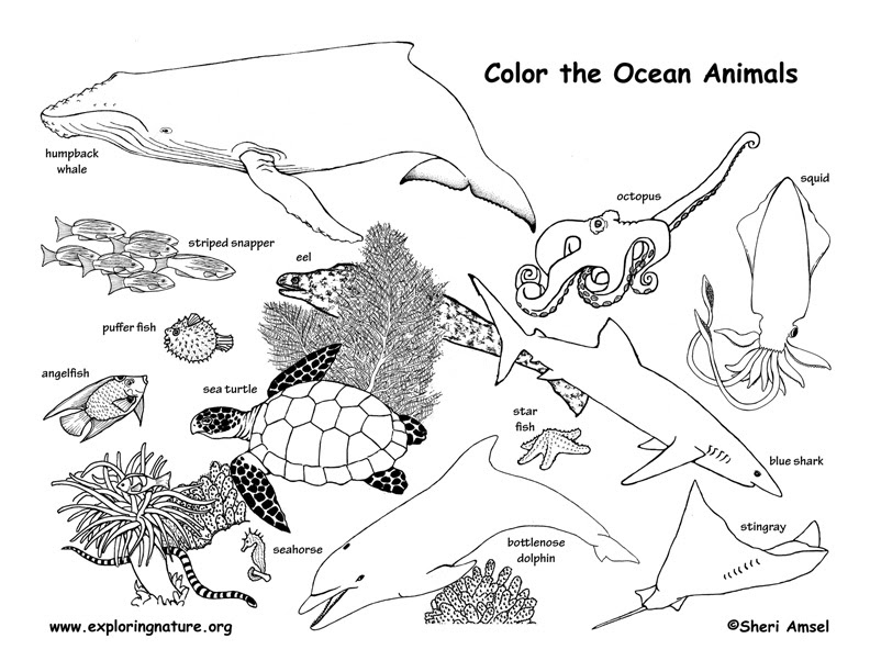 Ocean Animals Coloring Page - Coloring Pages
