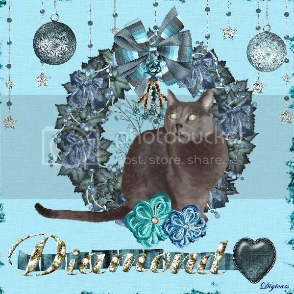 House Panther,Russian Blue,Holiday Glitter,Happy Holidays
