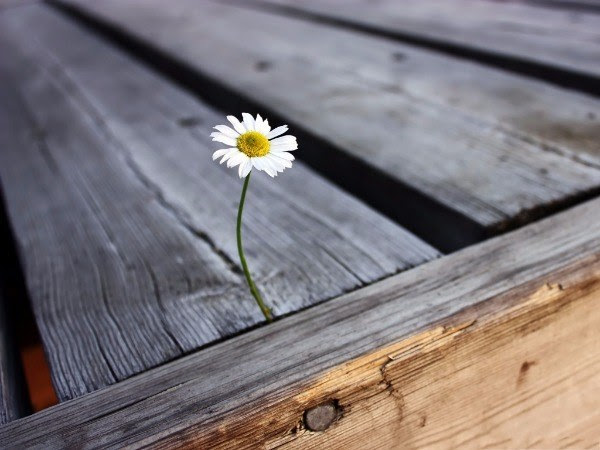 Lonely-Flower-Picture-Tiny-White-Flower-in-Bloom-Tough-Living-Condition