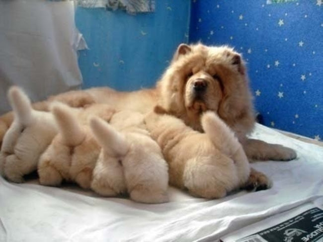 puppy-dog tails