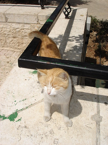 The cat I watered