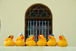 The Mernissi Ducks