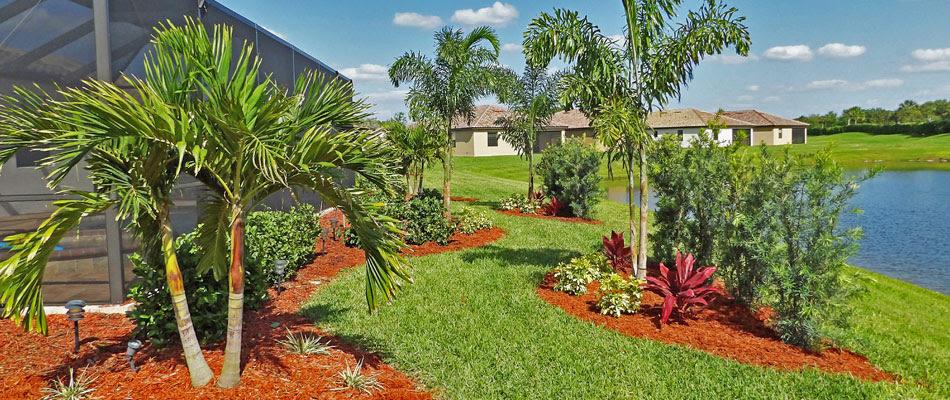 The 5 Most Popular Palm Trees In Bradenton Fl Three Seasons Blog