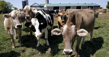 الإحصاء: مصر استوردت حيوانات منوية لذكور الأبقار بـ1.2 مليون جنيه فى 2016