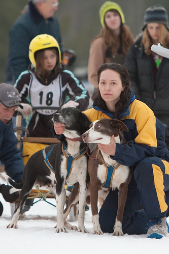 dog sled-21