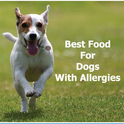 food  dogs  allergies