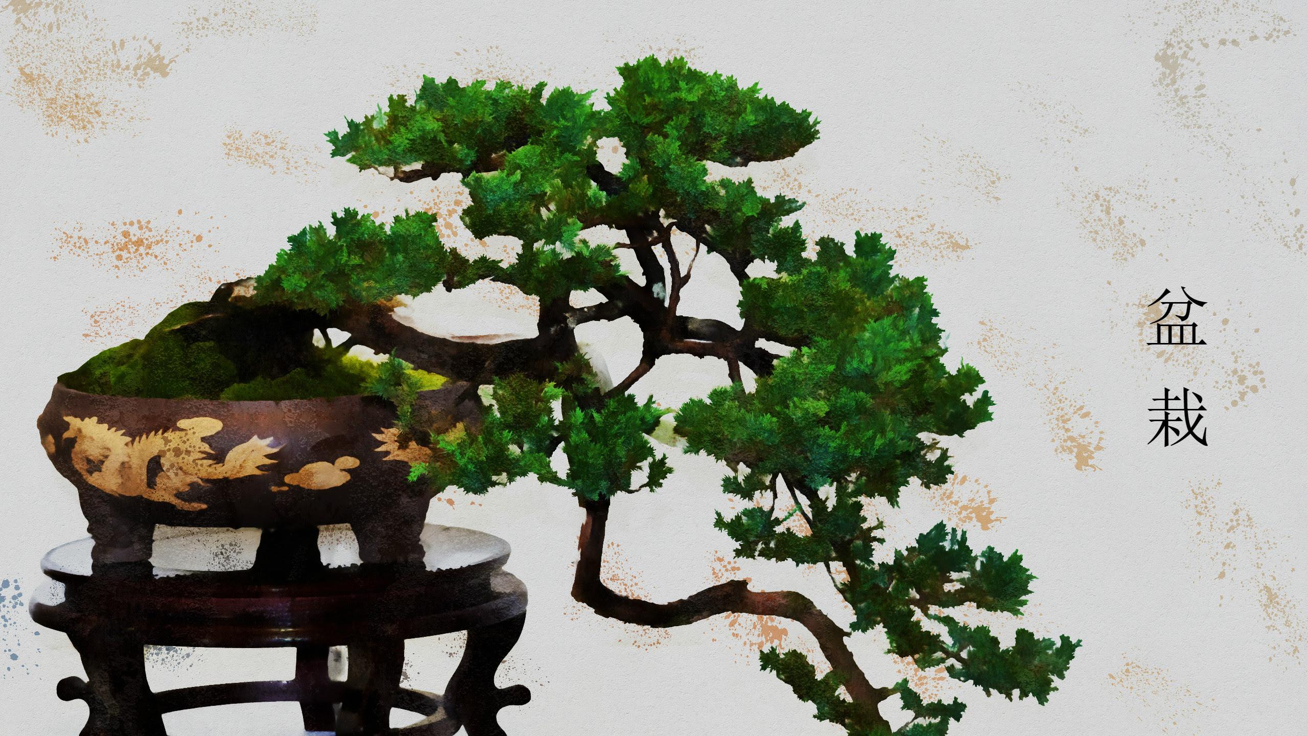 Bonsai Tree Wallpaper (67+ images)