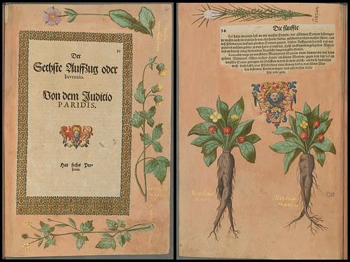 Elisabeth zu Hessen, Kassel 1598 f