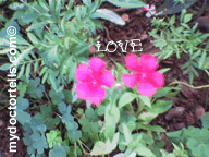 love_flowers_mydoctortells.com