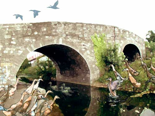 Ducks at Broom Bridge