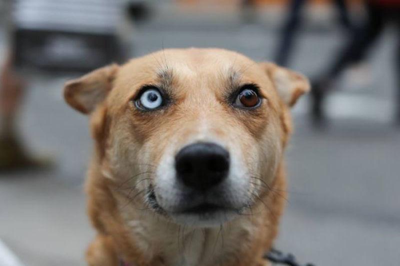 20 animais extraordinariamente belos com olhos ímpares 08