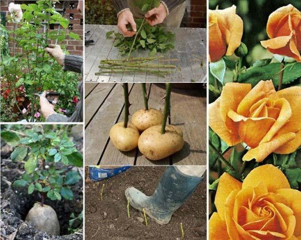 AD-Gardening-Tips-3