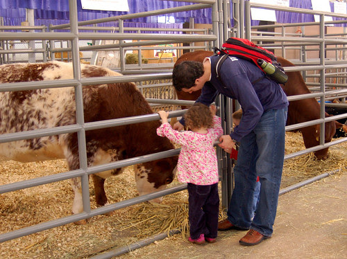 Grace meets a cow